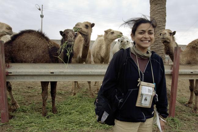 Moni_Camels